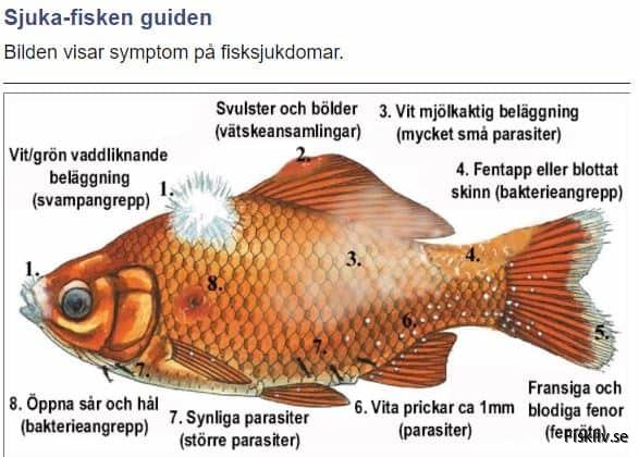 sjuka fisken