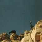 Nysgerrige venner på klippen over Marmara Beach.