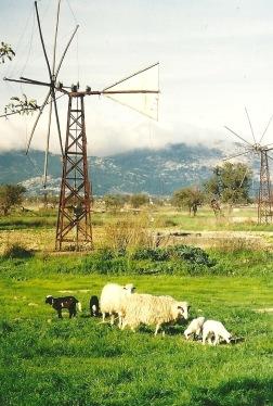 Nede på Lasithi-sletten var/er der mange former for landbrug.