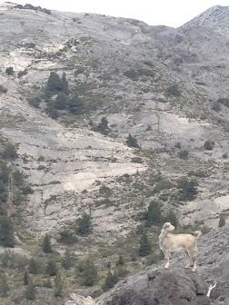 Den sporadiske bevoksning gav skønne minder om området oven for Askifou, hvor jeg havde været 14 år tidligere.