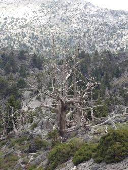 Vildt? Absolut. Mange forskellige specielle træer, som skulle være lette at genkende, f.eks. når man søger vej tilbage. Men det fungerede ikke for mig.