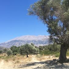 23. september. På vej mellem Foufouras og Agia Galini. Psiloritis deroppe.