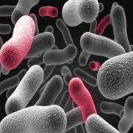 I studien kunde man se att det värst förekommande fallet var hela 35 gånger smutsigare än en toalettsits.