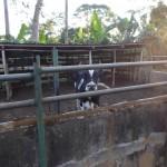 Debora farm kohage