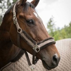 Haze Collection Grimma Brun - Brun ponny