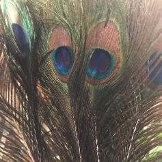 Påfågelfjäder