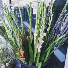 Gladiolus ST