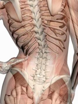 HälsoPerlan i Åhus erbjuder holistisk behandling med Dornmetoden (Dornterapi) mot tex ryggvärk,  besvär med axel, nacke, rygg och lede.