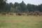 hjortar i hägn