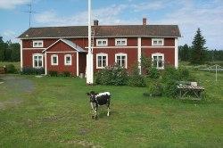 Ostigården en av de äldsta gårdarna. Där bedrivs än i dag jordbruk.