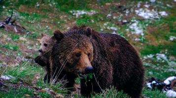 Språkbolaget-Marcus-björn klippiga bergen-översättningar