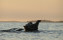 Guide Natura Safari to the singing seals (5)