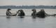 Guide Natura Safari to the singing seals (16)