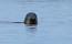 Guide Natura Swim with seals (1)