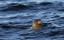 Guide Natura Swim with seals (6)