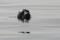 Guide Natura Swim with seals (17)