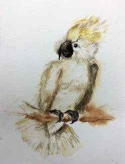 Kakadua av Louice Pettersson