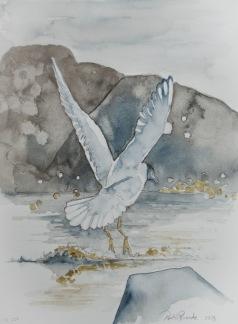 Fiskmås på flykt av Pontus Runeke