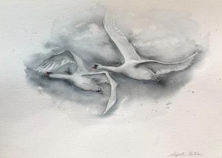 Flygande svanar av Ingela Matsson