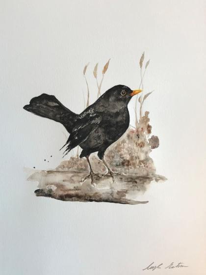Stare av Ingela Matsson. Akvarell. Pris 1000 kr