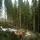 Skogsarbete är en naturlig del av vintern för oss