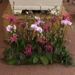 Rosa toner med orkidéer
