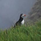 Shetland vandring 2014 139
