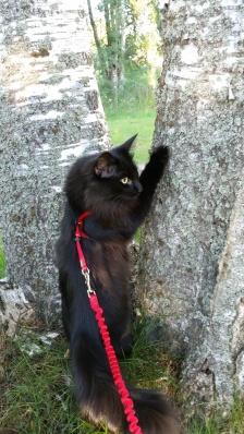 Sané inspekterar björkarna utanför vårt hus i stan.