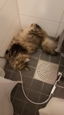 Khedira myser i badrummet