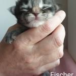Fischer 1 vecka