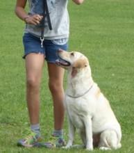 Hundungdom-Fortsättning