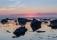 Summer Solstice Retreat, Fårö Gotland