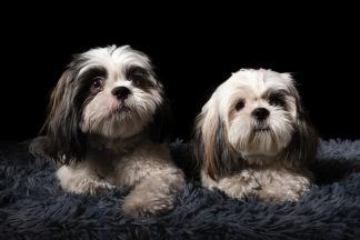Självförtroende för blyga hundar