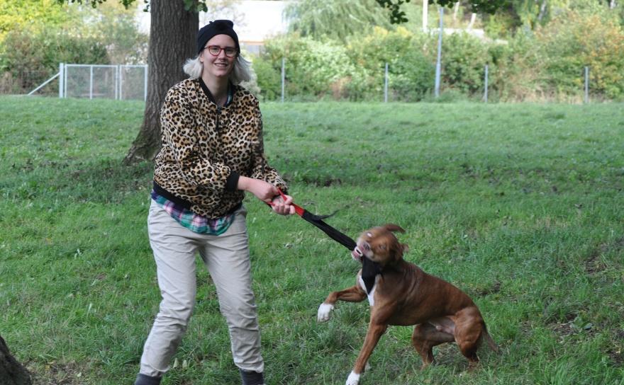 Hitta det din hund tycker är allra roligast och hoppas att din hund ser bättre ut än min hund när hen gör det.