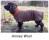 annies wool 2