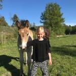 Helija f 23 april e. Paj 2069, u. Hedda 23893 uppf & äg Therese o Björn Nordmark