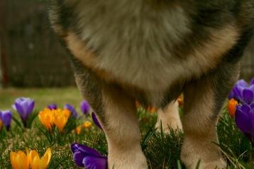 Korta blommor till korta ben...