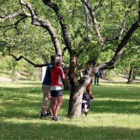 Trädvård