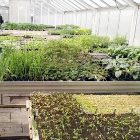 Plantuppdragning1