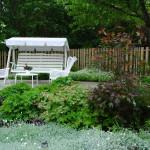 Silverarv, näva och japansk blodlönn