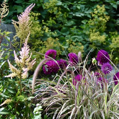 Växter till krukor och urnor.