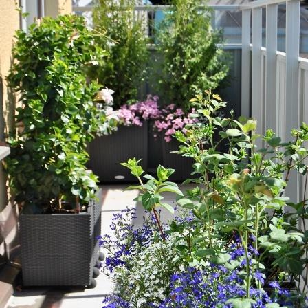 Sommarblommor, buskar och rosor