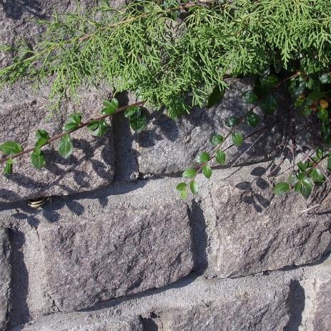 Mur i storgatsten