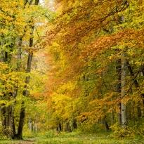 Oktober, Nygårdspark Hunneberg, foto Conny Andersson