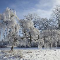 Februari, Rimfrost, foto Conny Andersson