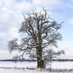 December, foto Conny Andersson