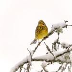 Januari, foto Tommy Andersson