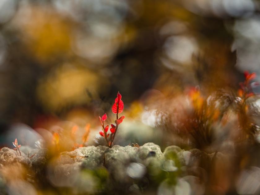 September, foto Conny Andersson