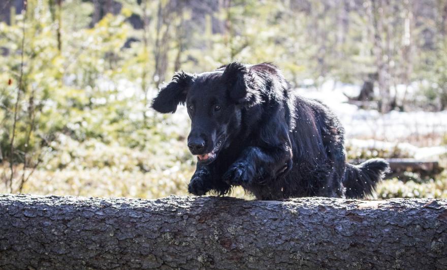 Foto Åsa Nenzen ©