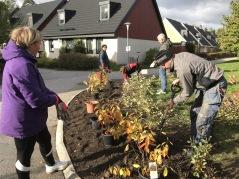 Plantering av nya växter och vårlökar 2020